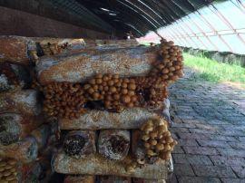 食品杀菌锅 方形食用菌灭菌器生产厂家