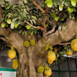 厂家直销广州松涛工艺仿真菠萝蜜树