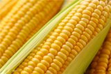 黔货珍品:玉米颗颗精品饱满