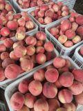 鮮桃,油桃,葡萄,蘋果,貴妃梨