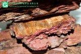 北方松树皮填料 100-200mm