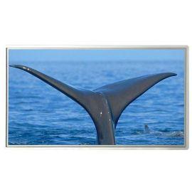 信特安65寸触摸屏教学一体机大屏壁挂4G/I5