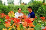 亳州冠红杨有几种颜色