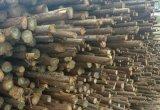 绿化支撑杆批发厂家专业性哪家强,认准恒昌木业郑州园林绿化杉