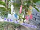供应塑料吊牌 PVC吊牌 标签吊牌 园艺吊牌 实验耗材 大棚用