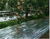 青島銷售蘋果反光膜+1.3米寬