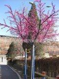 中山广万达供应LED樱花树灯