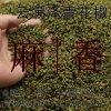 云南昭通炎山花椒/农户自销青花椒/麻椒云满泽厂家