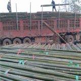 供应编蒜箔用的4米5米小竹杆 苦竹杆