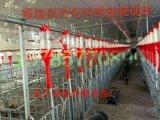 养猪设备 自动喂料系统 自动化料线设备自动化养猪设备自动化供料设计安装