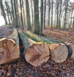 德国橡木实木进口 木材 原木红橡欧洲家居板木料金威