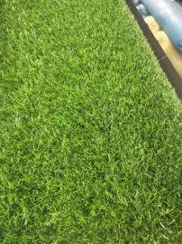 草坪大全   草坪種類 假草坪