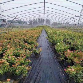 抗老化防草布 农用果园防草布 生产防草布