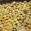 糯玉米切段机 水果玉米切段机 玉米分段机