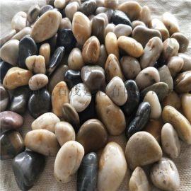 河北雨花石厂家 鱼塘用鹅卵石 水族鱼缸装饰石头