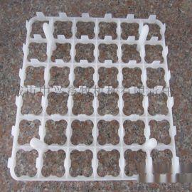 36枚蛋托 塑料种蛋托 种蛋  36枚托盘