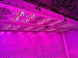 湖北智慧頂置光型氣候室實驗室植物氣候調節