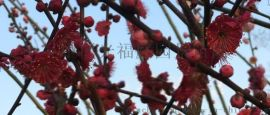 苏州花木苗木市场
