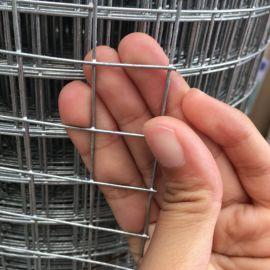 建筑工地抹墙网 外墙保温网现货 改拔电焊网厂家 铁丝网