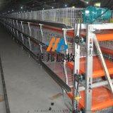 肉鸡自动养殖设备 热镀锌板三层清粪带鸡笼