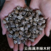 雲南滿澤貴州辣木籽種植基地,貴州辣木籽,辣木籽產地