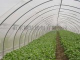 大棚蔬菜专用防虫网厂家