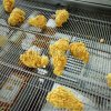 食品裹粉機,鹽酥雞、雞米花裹粉機,雞米花滾筒上粉機