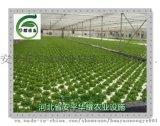 潮汐苗牀潮汐灌溉式苗牀的優勢與特點