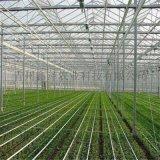 育苗玻璃智慧連棟溫室生產廠家
