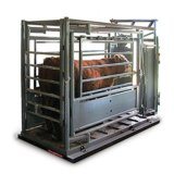 廣西來賓1噸圍欄地磅秤兩開門牲畜秤 廠家直銷