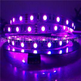LED5050灯带低压12V 5050RGB裸板滴胶防水60珠贴片软灯条厂家直销