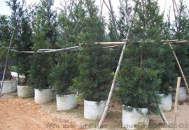 安徽哪家生产的植树袋价格实惠