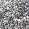 本格厂家直销鹅卵石 水质净化垫层卵石滤料