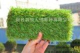 北京市 森悅SY352150080-54w高爾夫球場_打造精品草坪_供應商