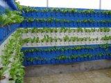 塑料墙体栽培