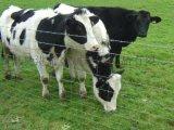 草原牛栏网,隔离防护热镀锌牛栏网