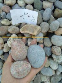 河南鱼池贴壁用天然鹅卵石,白色卵石,黑色雨花石