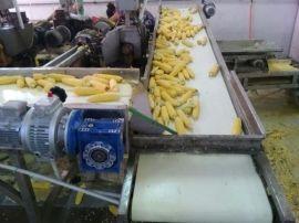 食品级皮带输送机 甜玉米深加工带式输送机