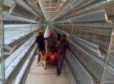 安阳蛋鸡笼 层叠鸡笼 育雏笼 自动化养鸡设备 银星