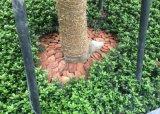 松树皮有机覆盖物+松鳞+有机介质