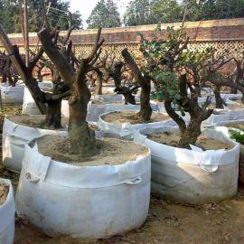 国标无纺布博一化纤植树育苗种植营养控根美植袋