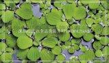 上海批發水生植物哪裏有