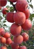 红富士蘋果