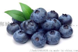 2020新品蓝莓 草莓 食品烘干 干燥设备