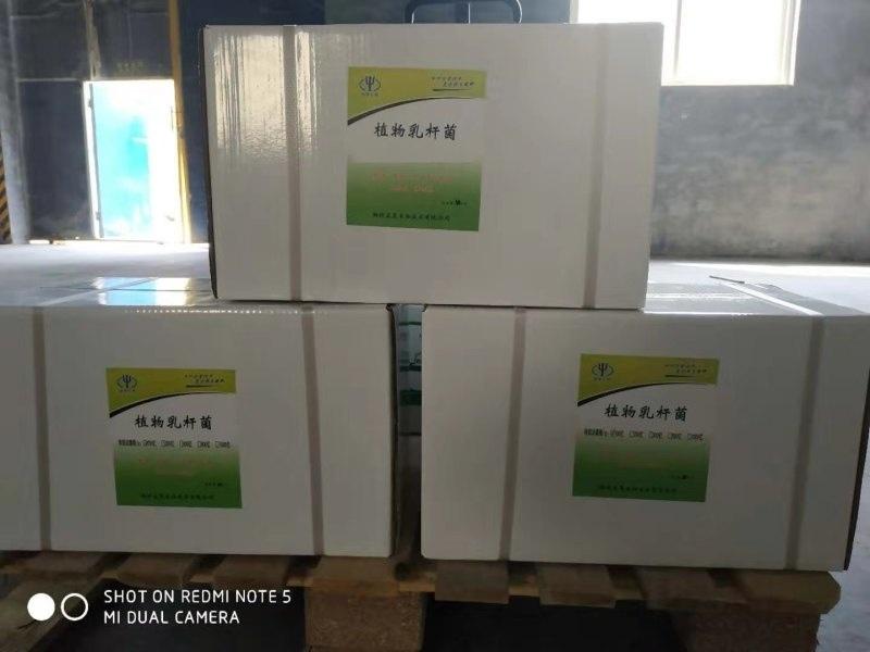 飼料廠專用植物乳桿菌,飼料廠用乳酸菌價格