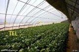 齊鑫溫室廠家的日光溫室大棚質優價低