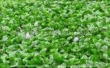 上海水生植物哪里有批发大全