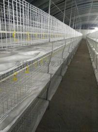 多层肉鸡笼肉鸡笼层叠设备鸡笼子厂家直销