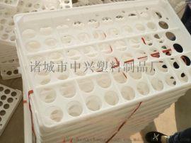 蛋托供应商 禽类蛋托 塑料蛋托批发