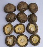 随州香菇种植基地常年香菇批发